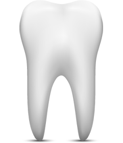Tooth illustration