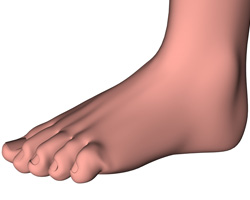 A 3D digital model of a foot with a hammer toe